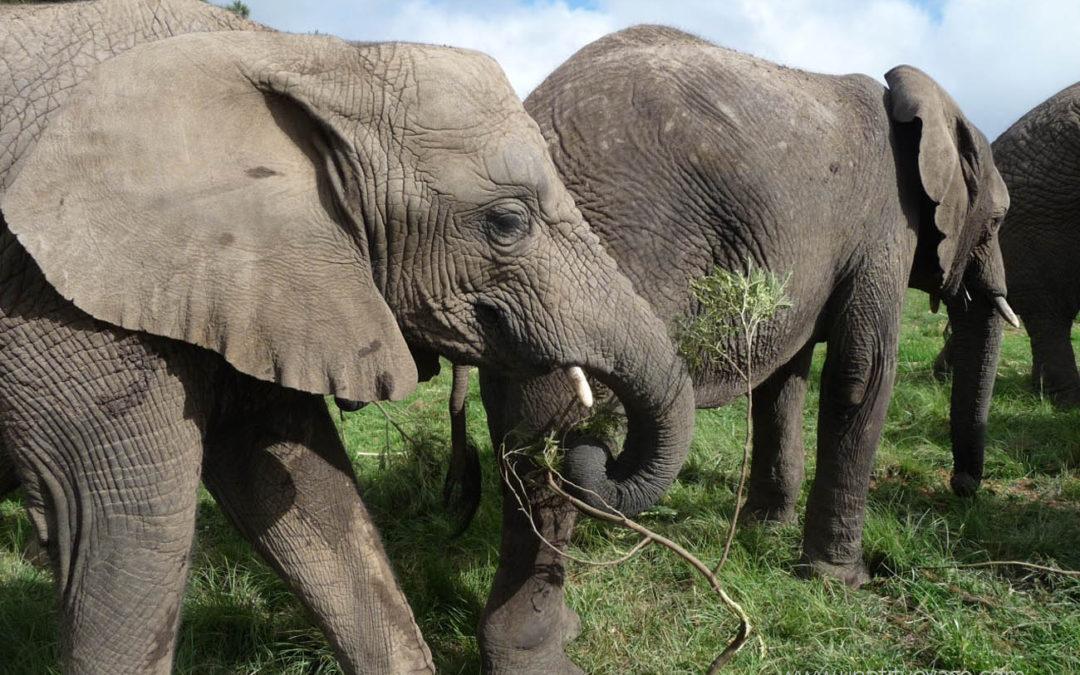 Afrique du sud – Safaris et voyage à bord du Rovos