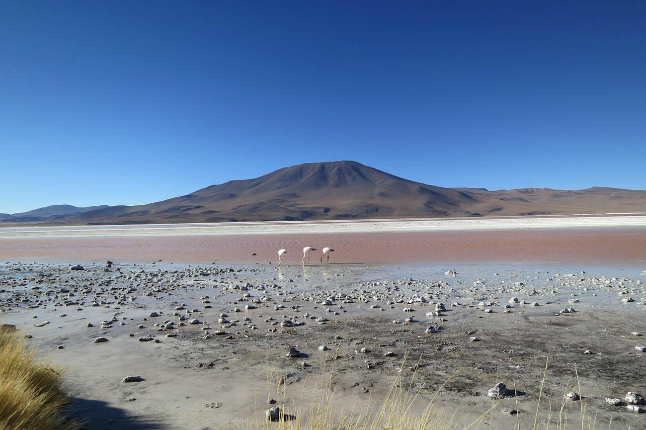 Chili-atacama-desert-flamencos